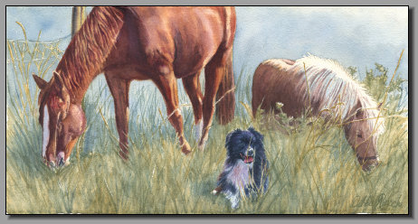 Rachels Herd, Horse, Pony, Border Collie